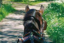 Körning / Köra med häst och vagn.
