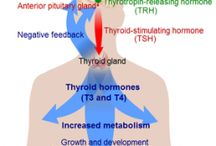 Thyroid Info / I have Hashimoto's disease. It sucks. For awhile I let it rule most of my daily existence. But I changed my attitude and now I fight back. Some days are better than others.  / by Amynator Tjaden