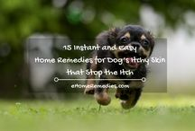 Home Remedies for Dogs / I am a passionate dog lover with three of my own and love sharing home remedies with other pet owners so they too, can give the best of safe and natural health to their dog's.