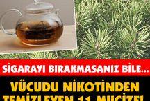 nikotin temizleyen besinler
