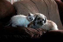Man's Best Friend--Dogs