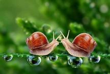 escargots/limaces
