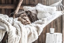 Throws, Pillows & Cozy Goodness / by Christine @ Little Brags Blog