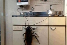 Cockroach file