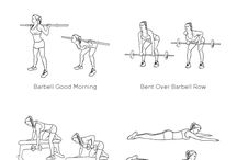 Workout - LOWER BACK