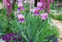 Цветники / Вдохновляющие сочетания декоративных растений