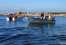 Marisqueo en Galicia / Conoce como es el arte del marisqueo, una técnica utilizada por los expecialistas del mar, que cada día lo emplean para traenos al mercado manjares tan exquisitos como percebes, almejas, ostras, cangrejos y muchos más!