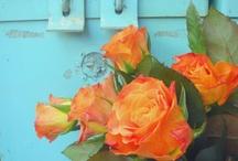 orange and aqua / by Maggie Scott