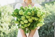 Wedding / by Marina Giller *Agua Marina Blog*