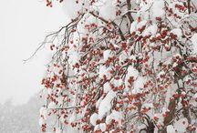 Snow #Winternature #*