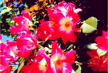 I colori della natura / The flowers and the sun are the only beauty that makes life tolerable [V. Brocchi]