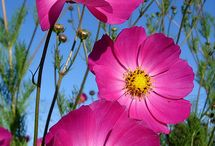 Pictures of flowers  / by Carrie Farrar