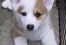 Willie,s hondjes / Honden