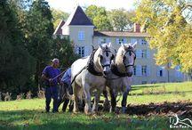 Cheval au travail - Horse  to work / La valorisation du cheval de trait par le travail... A découvrir sur : http:www.espritrait.com