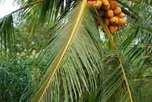 agaclar - trees