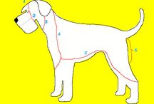 Hundar och trimning