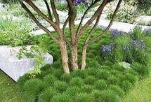 plantes sous arbres