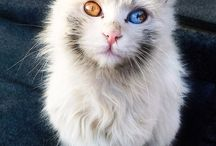 Cats and Kittens / Cats and Kittens for sale in UK