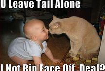 Funny cute animal