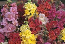 virágok és jelentésük