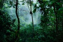 Costa Rica / by Lisa Wiseman