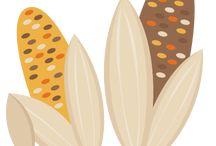 Pumpkin / Fall