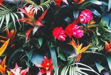 Tropical flowers / Tropical flowers.