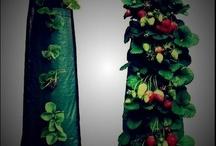 Truskawki, poziomki , maliny i inne owoce