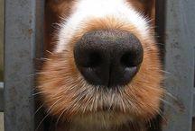 doggy photos