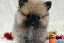 General Cute