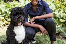 We Love Bo Obama!!!