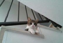 My cat Mr. Tao / A very cute cat