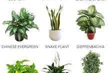 home - Plants