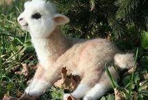 Livi's llamas