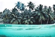 Beaches and Tropical / by Haute and Rebellious