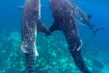 Shark love / by Kate Smallidge