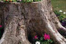 jardin (fleurs, arbres, plantes…)