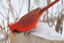Birds / by Sherrie Beaver