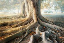 árboles bellos