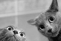 Кошки это кошки