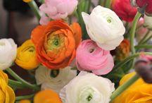 Spring Awakening!! / by Anna Marie
