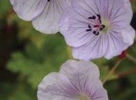 Mooie planten