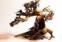 Bonsai Driftwood Australia - Exoaquaristic.com.au / Bonsai Driftwood Australia