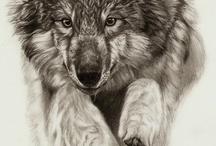 wilki zdiecie