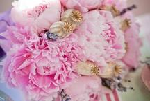 Flowers / Pretty