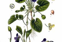 Ilustración de botánica