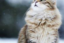 chats / J'adore les chats ils sont tellement beaux!!! Ce sont ici des photos découvertes sur pinterest..