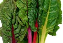Tips for Growing Swiss Chard / Board dedicated to the world of growing swiss chard!