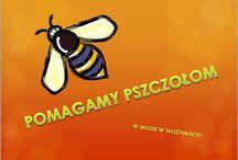 MGOK Woźniki Akademie Przyjaciół Pszczół