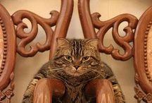 Fotky koček